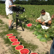 Checking out the spring watermelon crop